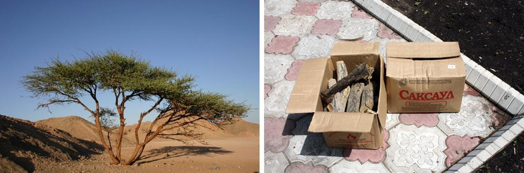 саксаул и готовые саксауловые дрова